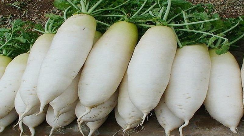 Le navet, ce légume « mal aimé » aux nombreuses vertus - Algérie