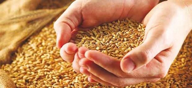 Cent quintaux de blé tendre saisis - Algérie