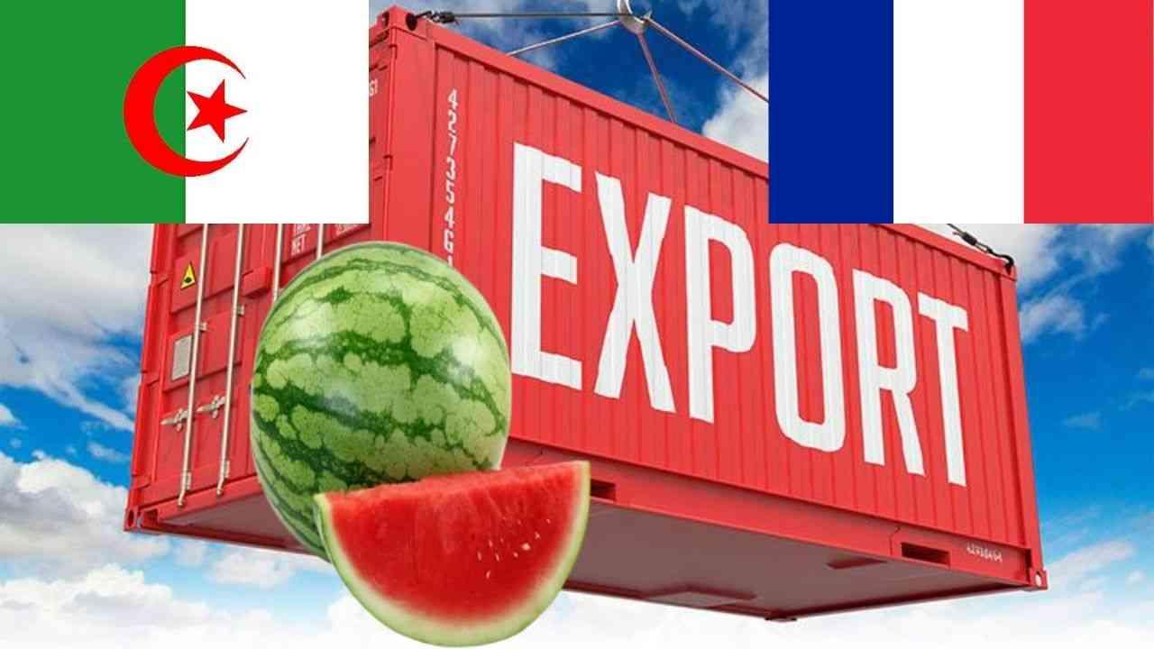 Exportation Algérie – France : départ de la première cargaison de pastèque (Vidéo) - Algérie