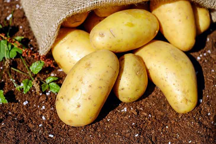 Pomme de terre : Une récolte de plus de 10 millions de quintaux prévue à El-Oued - Algérie