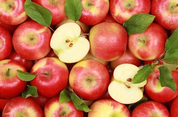 Production prévisionnelle de plus d'un million de quintaux de pomme - Algérie