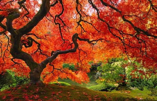 من وحي الطبيعة الخلابة ..إليك أكثر الأشجار جمالاً وشهرة في العالم