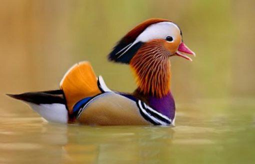 18صورة لأجمل الطيور الملونة في العالم