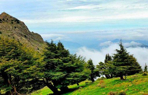جنة صغيرة في روعة الطبيعة الجزائرية..12 صورة لبلدية 'إيليلتن' بتيزي وزو