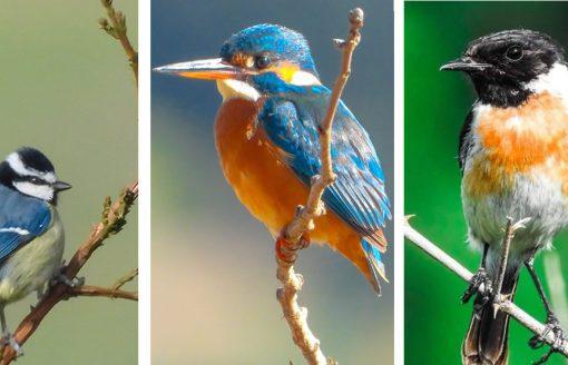 40 صورة رائعة للحياة البرية في ولاية ميلة الجزائرية