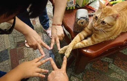شاهد..مواقف طريفة لتصرفات للقطط ستضحكك