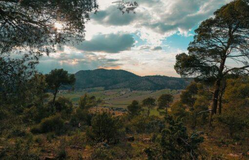 """على بساط اخضر ساحر تتشكل مناظر طبيعية رائعة في منطقة """"بسطامة"""" بالجلفة"""
