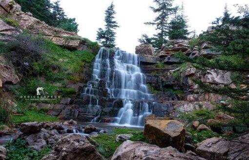 """""""غابة بني ملول"""" طبيعة ساحرة وسط جبال الأوراس تستحق الزيارة"""