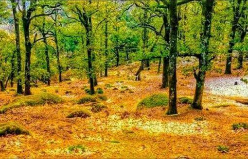 غابة جبل المشروحة… طبيعة عذراء ساحرة لن تصدق أنها في الجزائر