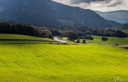 """ڤنزات """"إيث يعلى""""… بلدة جزائرية فريدة في قلب طبيعة خلابة"""